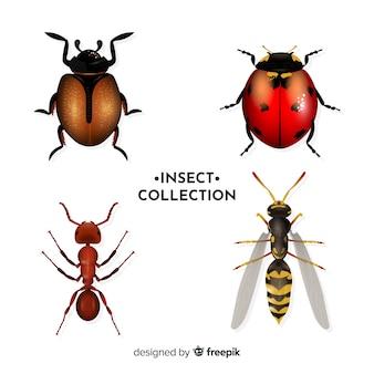 Pacote de insetos realista