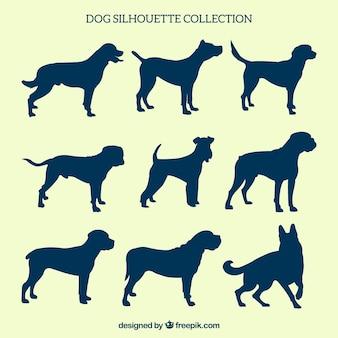 Pacote de nove silhuetas do cão