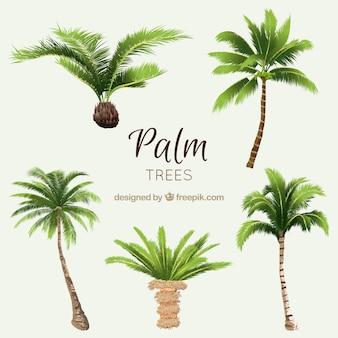 Pacote de palmeiras aquarela