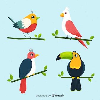 Pacote de pássaros desenhados à mão