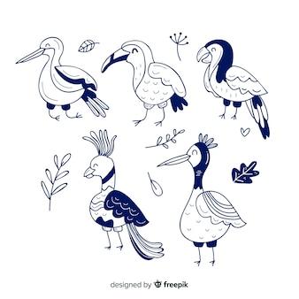 Pacote de pássaros exóticos de mão desenhada