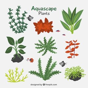 Pacote de plantas aquáticas