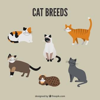 Pacote de raça bonito do gato