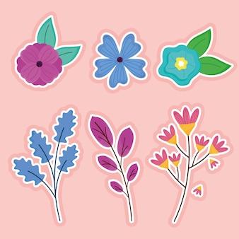 Pacote de seis flores da primavera e ilustração das folhas