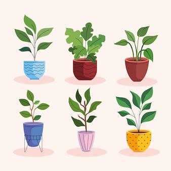 Pacote de seis plantas caseiras em vasos de cerâmica