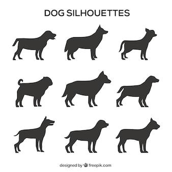 Pacote de silhuetas do cão perfil