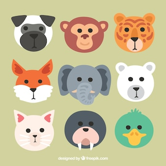 Pacote fresco de rostos de animais