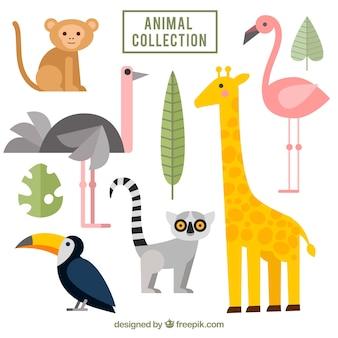 Pacote plano de animais exóticos