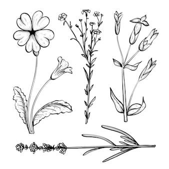 Pacote realista de ervas desenhadas à mão e flores silvestres