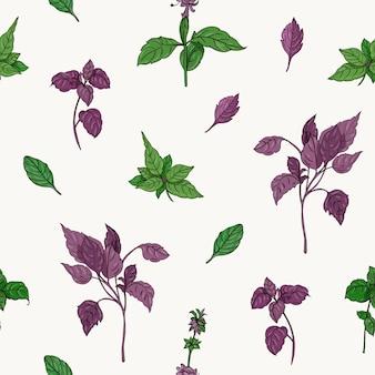 Padrão botânico com manjericão verde e roxo deixa mão desenhada no fundo branco.