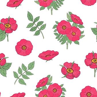Padrão botânico sem costura com flores rosa cão rosa, caules e folhas desenhadas à mão em estilo antigo em branco