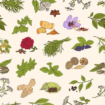 Padrão com várias especiarias saborosas frescas ou condimentos picantes na luz de fundo. plantas com folhas, sementes e flores.