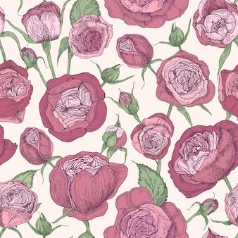 Padrão floral sem costura com rosas florescendo de austin