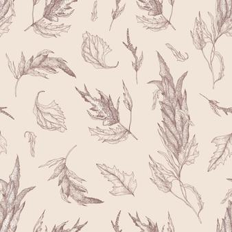 Padrão sem emenda botânico com quinua ou planta de amaranto desenhada com linhas de contorno sobre fundo claro. cenário natural com colheita de grãos comestíveis. ilustração vetorial realista em estilo antigo.