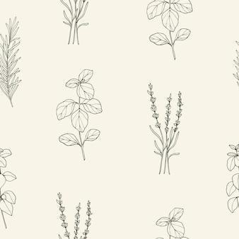 Padrão sem emenda com ervas e especiarias