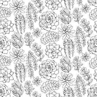 Padrão sem emenda com plantas suculentas desenhadas à mão no fundo branco