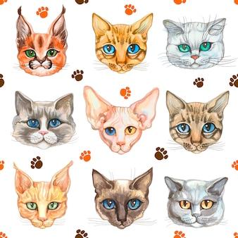 Padrão sem emenda com rostos de gatos de diferentes raças de gatos