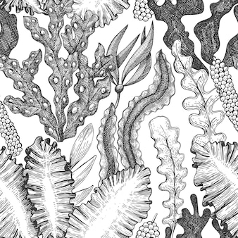 Padrão sem emenda de algas marinhas