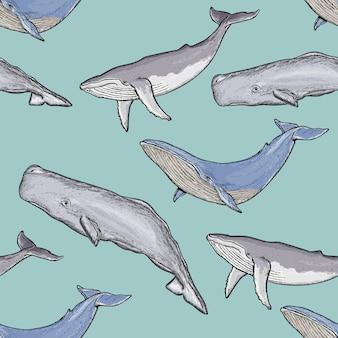 Padrão sem emenda de baleias