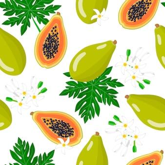 Padrão sem emenda de desenho vetorial com carica papaya ou melão frutas exóticas, flores e folhas