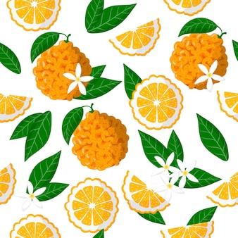 Padrão sem emenda de desenho vetorial com citrus aurantium ou frutas exóticas, flores e folhas de laranja amarga