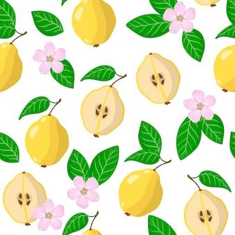 Padrão sem emenda de desenho vetorial com cydonia oblonga ou frutas exóticas, flores e folhas de marmelo
