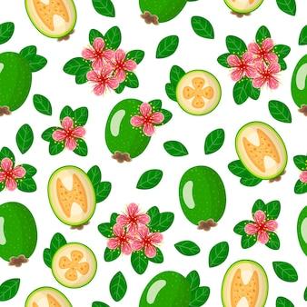Padrão sem emenda de desenho vetorial com folhas, flores e frutas exóticas de acca sellowiana ou feijoa