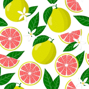 Padrão sem emenda de desenho vetorial com frutas exóticas citrus maxima ou pomelo, flores e folhas