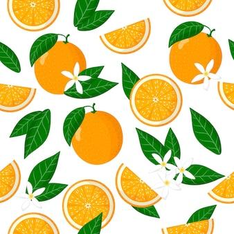Padrão sem emenda de desenho vetorial com frutas exóticas citrus sinensis ou laranja, flores e folhas