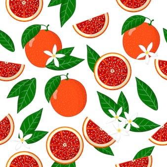Padrão sem emenda de desenho vetorial com frutas exóticas citrus sinensis ou laranja sanguínea, flores e folhas