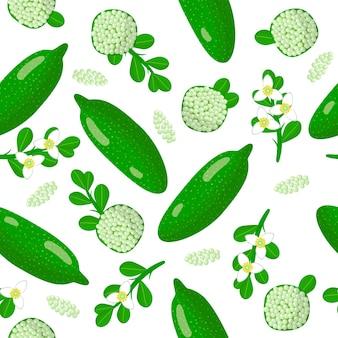 Padrão sem emenda de desenho vetorial com frutas exóticas, flores e folhas de citrus australasica ou limão australiano