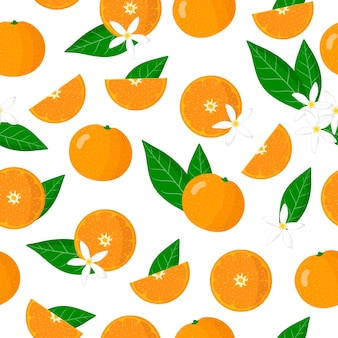 Padrão sem emenda de desenho vetorial com frutas exóticas, flores e folhas de citrus reticulata ou tangerina