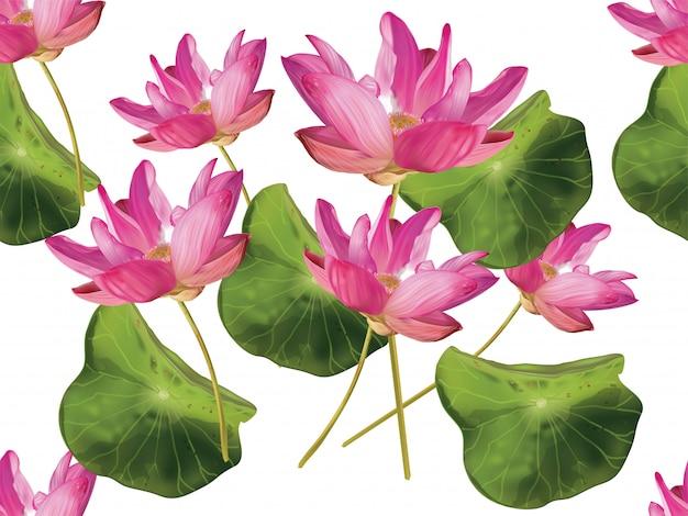 Padrão sem emenda de flor de lótus