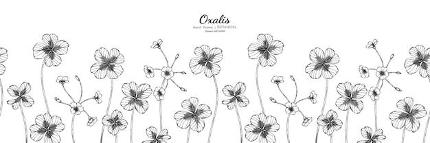 Padrão sem emenda de flor e folha de oxalis mão desenhada ilustração botânica com arte de linha.