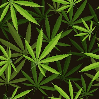 Padrão sem emenda de folha de cannabis.