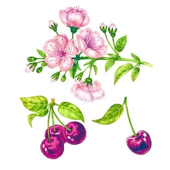 Padrão sem emenda de vetor com flor de cerejeira.