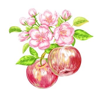 Padrão sem emenda de vetor com flor de maçã.