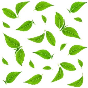 Padrão sem emenda de vetor de folhas verdes folhas de chá realistas ramos de verão ou primavera