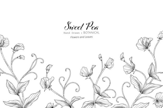 Padrão sem emenda ervilhas doces flor e folha mão desenhada ilustração botânica com arte de linha.