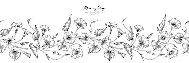 Padrão sem emenda flor e folha de ipomeia mão desenhada ilustração botânica com arte de linha.