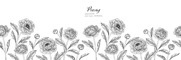 Padrão sem emenda, flor e folha de peônia mão desenhada ilustração botânica com arte de linha.