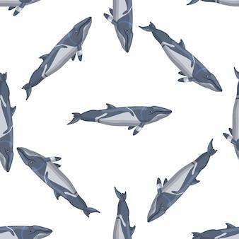 Padrão sem emenda menor rorqual em fundo branco. modelo de personagem de desenho animado do oceano para a tela. textura diagonal repetida com cetáceos marinhos. projete para qualquer finalidade. ilustração vetorial.