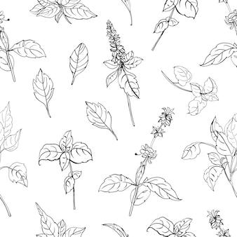 Padrão sem emenda natural com folhas de manjericão e flores desenhadas à mão com linhas de contorno pretas sobre fundo branco. cenário com erva aromática, planta cultivada para uso culinário. ilustração vetorial
