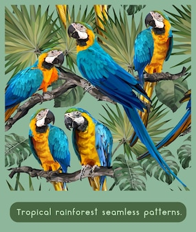 Padrões sem emenda da floresta tropical amazônica e pássaros coloridos de arara.