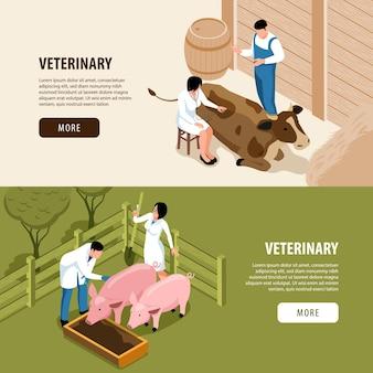 Página de destino veterinária de animais de grande porte