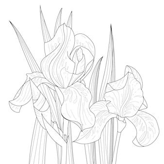 Página de flores de íris em folhas de um livro para colorir