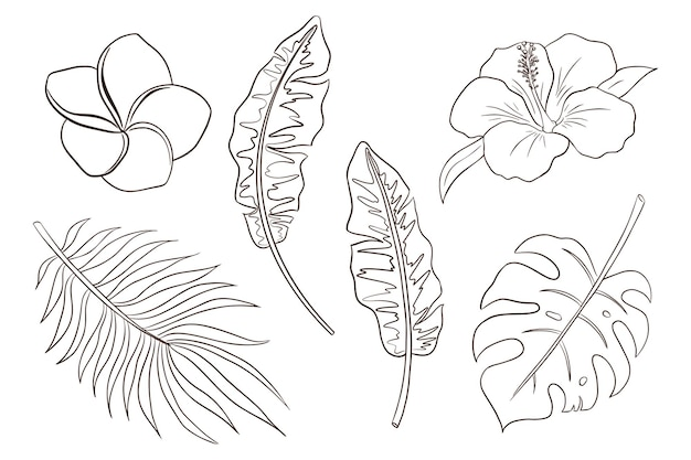Página para colorir de folhas e flores tropicais. conjunto de ilustrações vetoriais de flores e plantas exóticas desenhadas à mão. folhas de banana, palmeira e monstera, flores de hibisco e plumeria. vetor premium