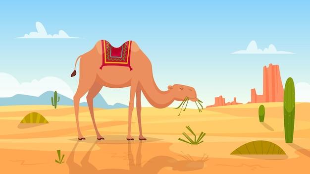 Paisagem africana com imagens de desenhos animados de um grupo de camelos de deserto ao ar livre.