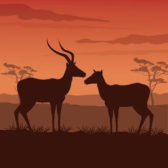 Paisagem africana do por do sol com silhueta gazelle que está