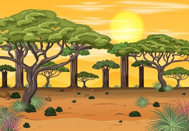 Paisagem da floresta africana na hora do pôr do sol